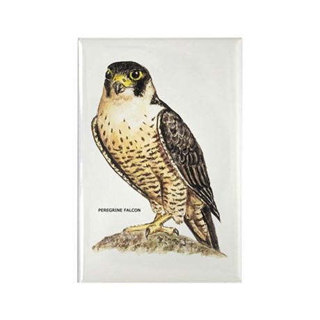 Peregrine Falcon Bird Rectangle Magnet (10 pack)