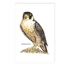 Peregrine Falcon Bird Postcards (Package of 8)