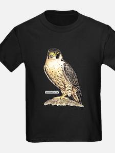 Peregrine Falcon Bird T