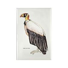 King Vulture Bird Rectangle Magnet