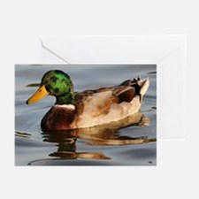 Drake Greeting Cards (Pk of 10)