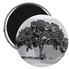 "Melville Tree 2.25"" Magnet (100 pack)"