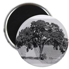 "Melville Tree 2.25"" Magnet (10 pack)"