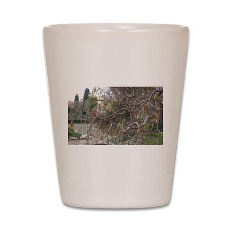 Florence Winding Twigs (Beautiful Plant World) Sho