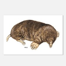 Mole Animal Postcards (Package of 8)