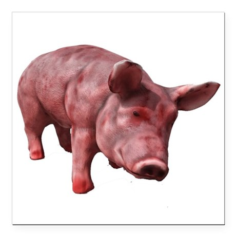 "Pig Square Car Magnet 3"" x 3"""