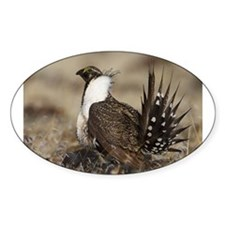 Sage Grouse Strut Decal