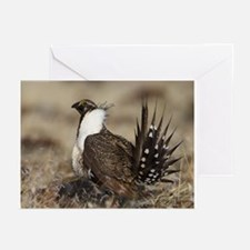 Sage Grouse Strut Greeting Cards (Pk of 20)