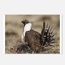 Sage Grouse Strut Postcards (Package of 8)