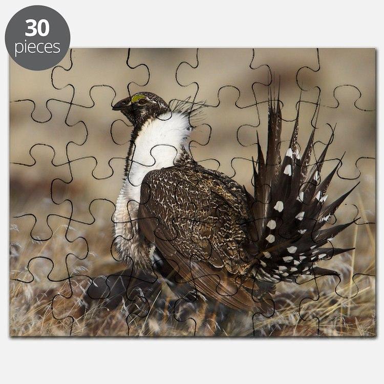 Sage Grouse Strut Puzzle