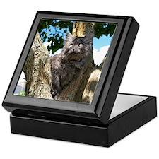 Fluffy Grey Kitten Keepsake Box