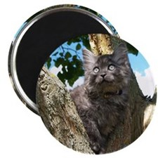 Fluffy Grey Kitten Magnet