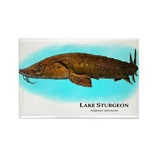 Lake Sturgeon Rectangle Magnet