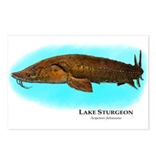 Lake Sturgeon Postcards (Package of 8)