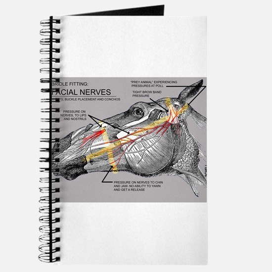 Facial Nerves and the importance of bridle fit Jou