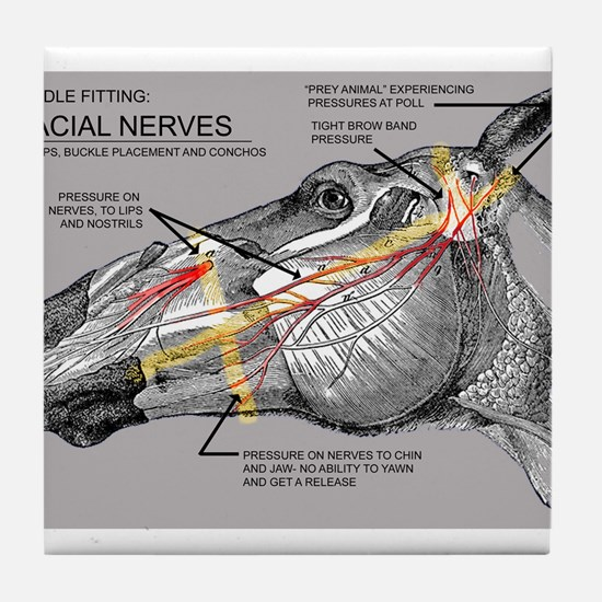 Facial Nerves and the importance of bridle fit Til