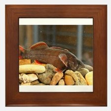 Yelowcheek Darter Framed Tile