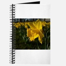 Easter Narcissus Journal