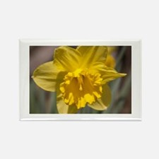 Narcissus Rectangle Magnet (100 pack)
