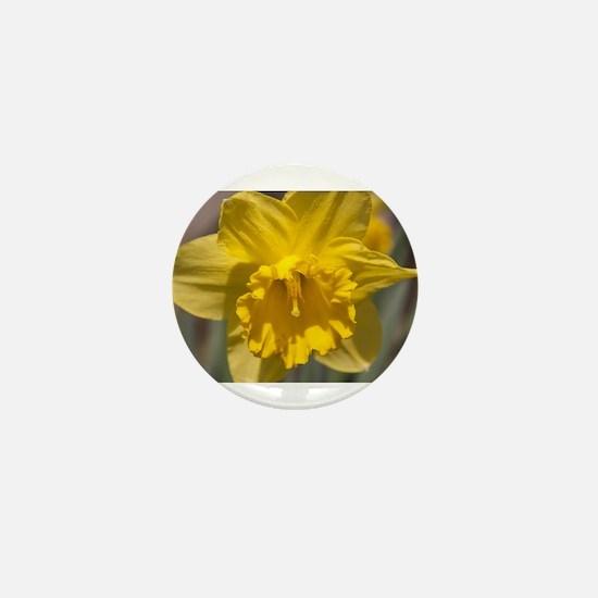 Narcissus Mini Button