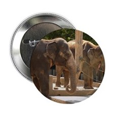 "Elephants 2.25"" Button"