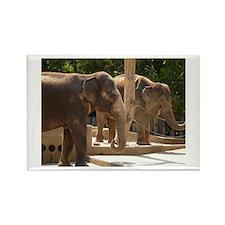 Elephants Rectangle Magnet (100 pack)