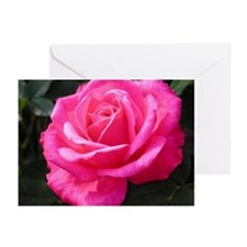 Pink Rose Greeting Cards (Pk of 10)