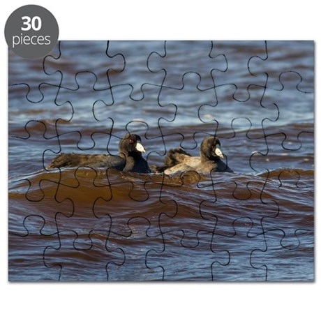 American Coots Puzzle