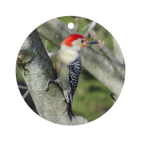 how to help a woodpecker that cant fly