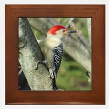 Red-bellied Woodpecker Framed Tile