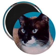 Snowshoe cat Magnet