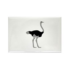 Ostrich Rectangle Magnet (10 pack)