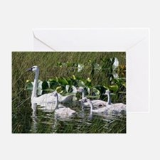 Trumpeter Swan and Brood Greeting Card