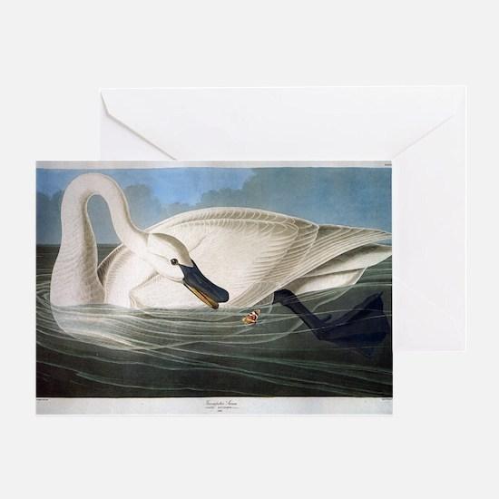 J J Audubon - Swan Greeting Card