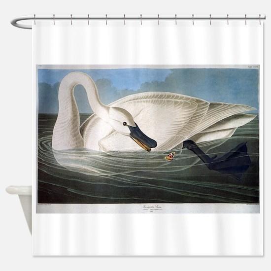J J Audubon - Swan Shower Curtain