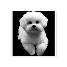 "Beau the Beautiful Bichon Square Sticker 3"" x 3"""