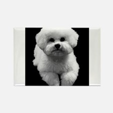 Beau the Beautiful Bichon Rectangle Magnet