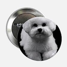 """Beau the Beautiful Bichon 2.25"""" Button"""