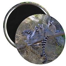 Lemur Line Magnet