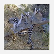Lemur Line Tile Coaster