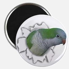 Ripping Quaker Parakeet Magnet