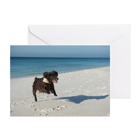Scully Runs Inlet Beach Greeting Cards