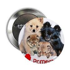 "Pomeranian 2.25"" Button"