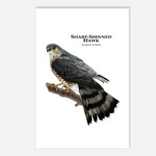 Sharp-Shinned Hawk Postcards (Package of 8)