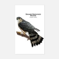 Sharp-Shinned Hawk Decal