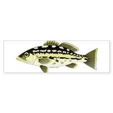 Calico Kelp Bass fish Bumper Bumper Sticker
