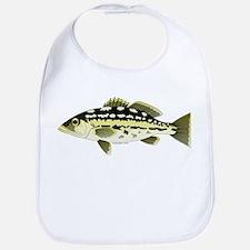 Calico Kelp Bass fish Bib