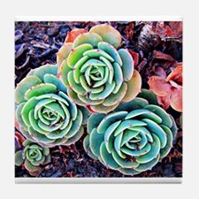 Succulents in the City Tile Coaster