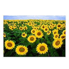 Sunny Daze Postcards (Package of 8)