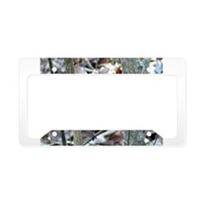 Beautiful BlueJay License Plate Holder